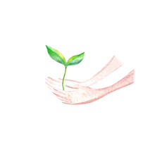 Sprout And Hands.Spring Picture.Watercolor Hand Drawn Illustration.White Background.