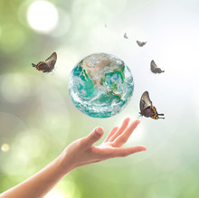 World Environment Day, Sustainable Ecology And Environmental Friendly Concept With Green Earth Planet On Volunteer's Woman Hands. Element Of  Image Furnished By NASA