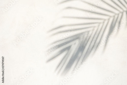abstract background texture of shadows palm leaves on a concrete wall Canvas Print