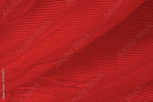Beautiful red feather pattern texture background  - 274718711