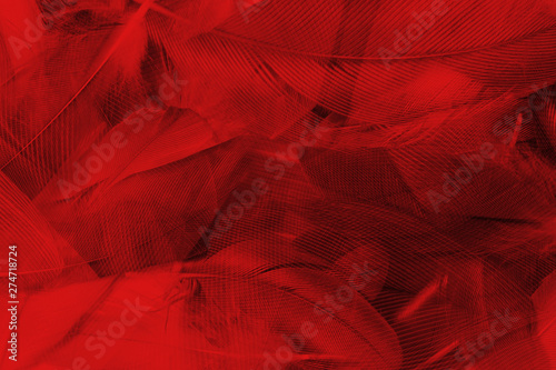 Beautiful red feather pattern texture background  - 274718724