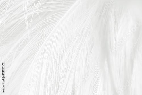 Photo  Beautiful white feather pattern texture background