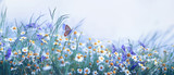 Fototapeta Kwiaty - Beautiful wild flowers chamomile, purple wild peas, butterfly in morning haze in nature close-up macro. Landscape wide format, copy space, cool blue tones. Delightful pastoral airy artistic image.