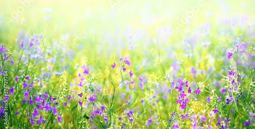 Foto auf AluDibond Lime grun Nature abstract background wild blossoming green grass flowers in field meadow close-up soft focus. Beautiful summer nature landscape, violet yellow juicy colors, copy space.