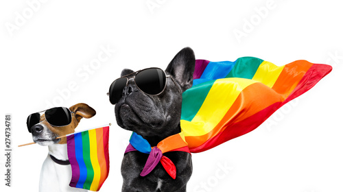 Cadres-photo bureau Chien de Crazy gay pride dogs