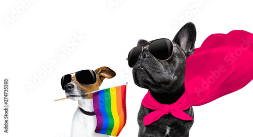 Photo Stands Crazy dog gay pride dog