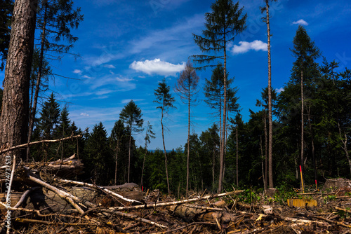 Pinturas sobre lienzo  geschädigter Fichtenwald im Siebengebirge