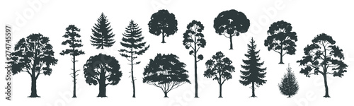 Obraz Trees silhouettes. Forest and park pines firs and spruces, coniferous and deciduous trees. Vector isolated retro images nature set - fototapety do salonu