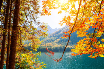 Panel Szklany Optyczne powiększenie Yellow autumn trees on the shore of lake in Alps, Austria. Beautiful autumn landscape