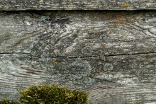 Old Weathered Wood Plank With Green Moss Background Texture