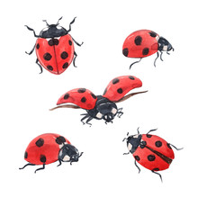 Watercolor Ladybug Illustration Set