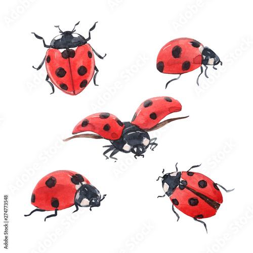 Fotografía Watercolor ladybug illustration set