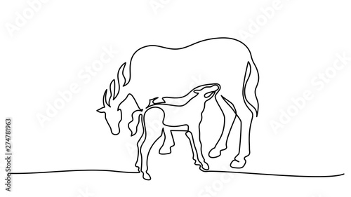 Leinwand Poster One line drawing. Horse feeds small foal