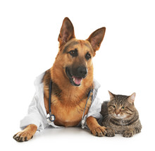 German Shepherd With Stethoscope Dressed As Veterinarian Doc And Cat On White Background