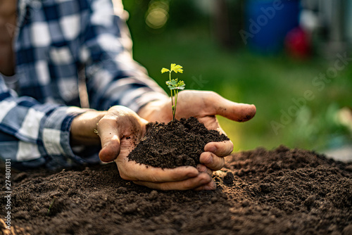 Fotografía  close up male farmer hands holding young small sprout in the ground soil under s