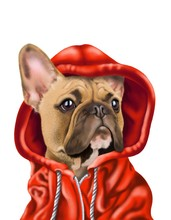 French Bulldog In Red Hoodie