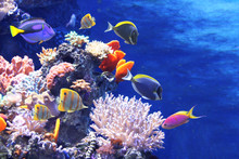 Underwater Scene With Tropical...