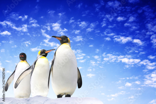 Pingouin Banner with three emperor penguins on blue sky background