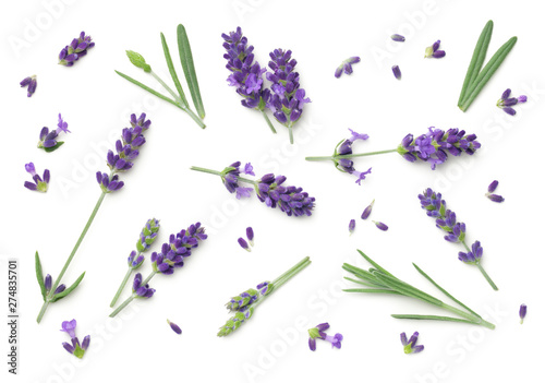 Lavender Flowers Isolated On White Background Wallpaper Mural