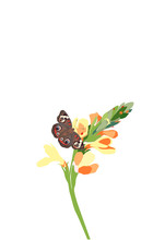Brown Butterfly And Flower Tro...