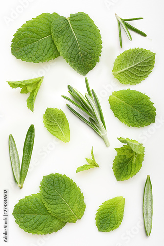 Green mint and rosemary leaves