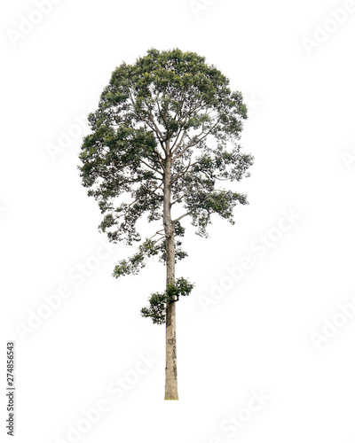 Fotografia, Obraz  Tree isolated on white background,clipping paths..