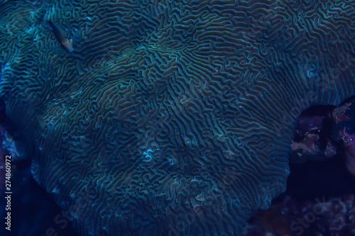 Poster Coral reefs coral reef macro / texture, abstract marine ecosystem background on a coral reef