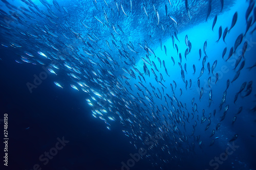 Photo lot of small fish in the sea under water / fish colony, fishing, ocean wildlife