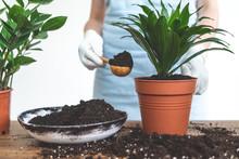 Gardener Woman Replant Green P...