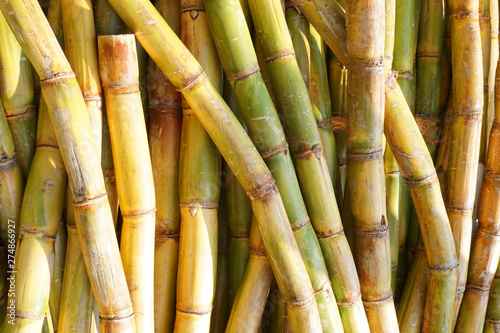 sugarcane texture as nice natural background Fototapet