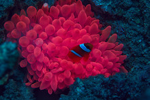 Marine Ecosystem Underwater Vi...