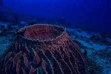 Underwater Sponge Marine Life ...