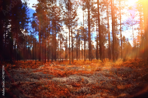 Foto op Canvas Diepbruine autumn forest landscape / yellow forest, trees and leaves October landscape in the park