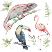 Watercolor Tropical Animals Set.