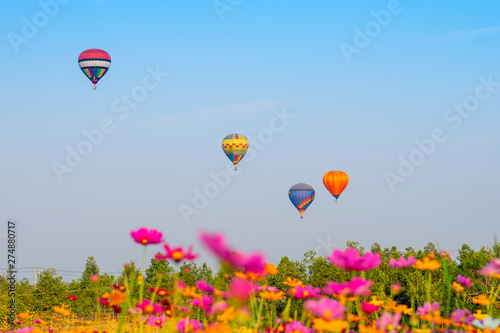 Poster Montgolfière / Dirigeable Colorful hot air balloons flying over cosmos flowers