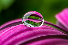 Water Drop On A Flower - Macro Photo