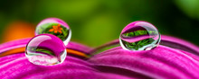 Water Drops On A Flower - Macr...