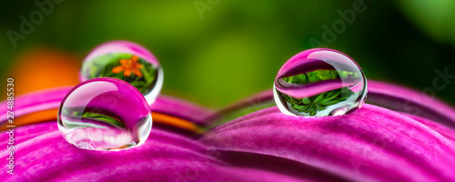 water drops on a flower - macro photo