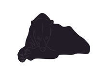 Vector Illustration Of A Polar Bear Who Lies, Drawing Silhouette, Vector
