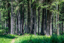 Dense Trees In The Forest Of B...