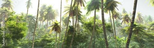 Türaufkleber Pistazie Jungle morning in the fog, palm trees in the haze, jungle panorama
