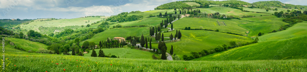 Fototapety, obrazy: Cypress road near small village of Monticchiello, Tuscany, Italy