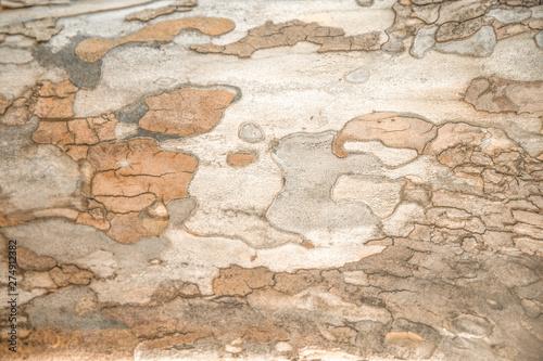 Foto auf AluDibond Alte schmutzig texturierte wand Bark Tree Texture