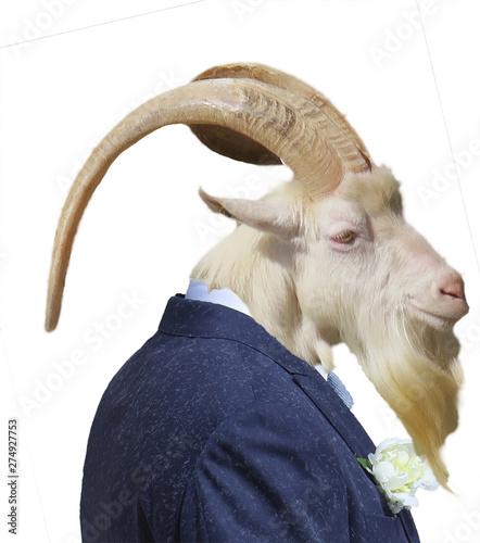 Tablou Canvas testa di capra con corna e abito da cerimonia