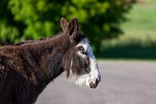 Donkey Profile