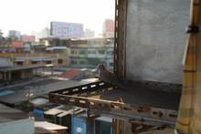 Zebra Dove Watching The Sunset