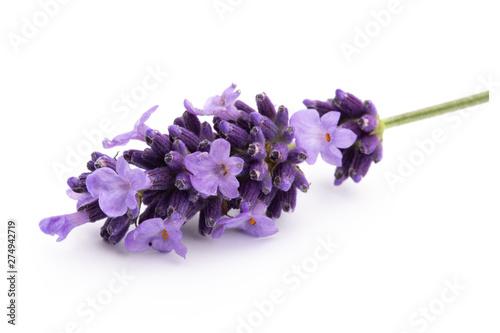 Spoed Fotobehang Lavendel Lavender flowers on a white background.