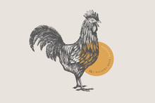 Graphical Drawn Rooster. Hand-...