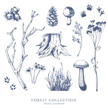 Nature Hand Drawn Vector Sketch. Collection Of Forest Plants. Mushroom, Grass, Hazelnut, Berries, Cones, Animal Tracks.