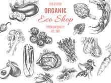 Organic Farm Shop. Vector Sket...